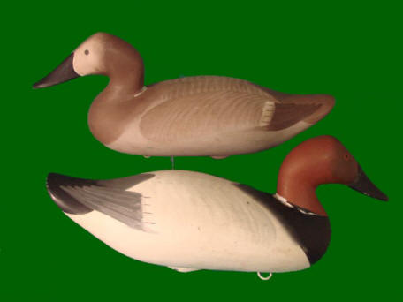 Madison Mitchell canvasback pair